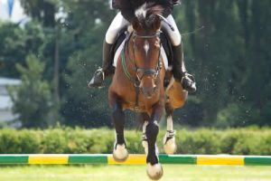 professional rider jumping over pole