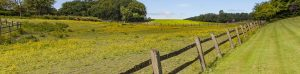 Land with wooden fence