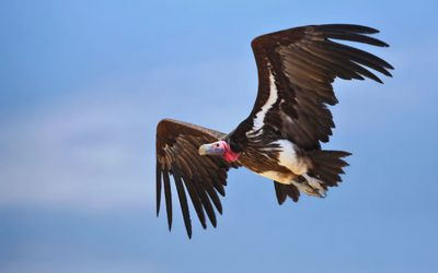 Vultures Beware – Borrowers have a new weapon in their armoury when tackling the vulture appointed Receiver